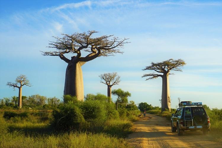 (マダガスカル)ずっと見たかった景色 バオバブと直面!