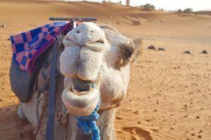 【追記】モロッコ・サハラ砂漠ツアーのお問い合わせ先